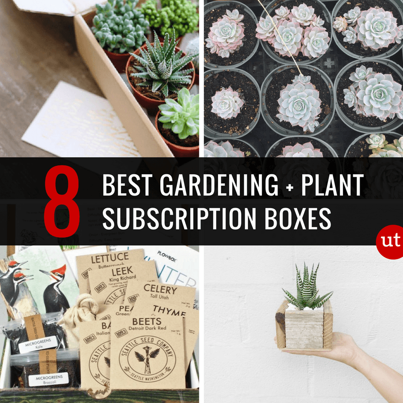 Best Gardening Subscription Boxes